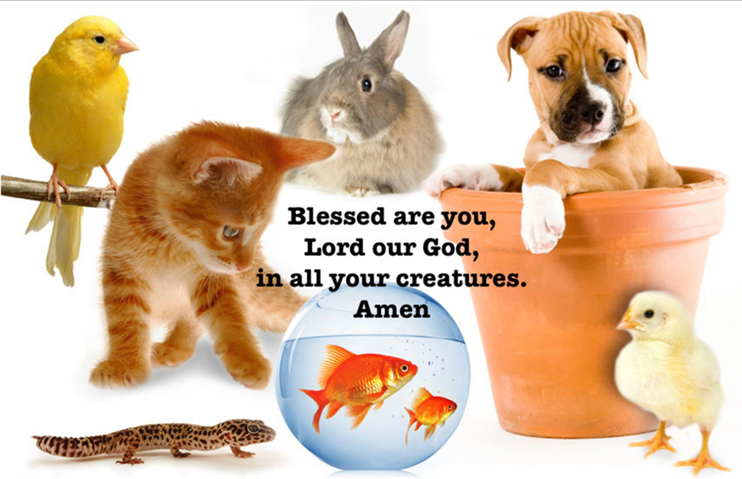 Pet Blessing October 7 at 8:00, 9:15, and 11:00 a.m.
